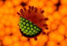 virus-hepatite