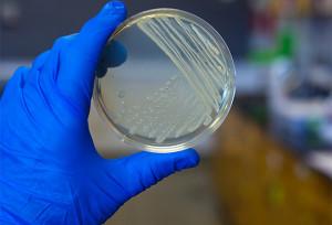 microbiologia_freerangestock
